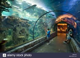 people in the tunnel watching the sharks shark reef aquarium  people in the tunnel watching the sharks shark reef aquarium mandalay bay hotel las vegas usa