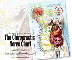 Chiro Chart The Only Nerve Chart For The Modern Chiropractor