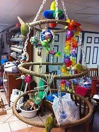 hoops for birs good idea for my hoop supply ss parakeets parrots