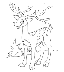 White Tail Deer Drawing At Getdrawings Com Free For