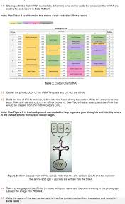 Solved Data Table 1 Dna Coding Strand 5 To 3 Atgacca