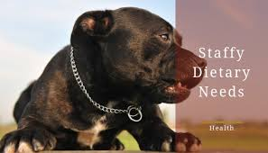 Staffordshire Bull Terrier Dietary Requirements What To