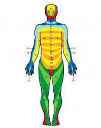 Dermatomal Pattern Simple Dermatome Map Uses Levels Research Treatments
