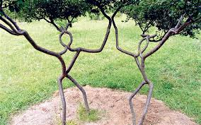 Compare Prices On Fruit Tree Shapes Online ShoppingBuy Low Price Fruit Tree Shapes