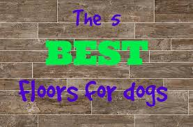 what s the best flooring for dogs