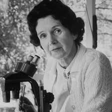 rachel carson scientist biologist academic journalist rachel carson scientist biologist academic journalist scientist activist environmental activist com