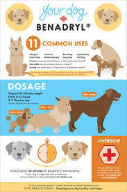 Dog Antihistamine Dosage Chart 5 Things Dog Owners Should Know About Giving Benadryl To Dogs