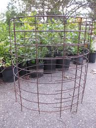 tomato cage made with concrete reinforcing wire