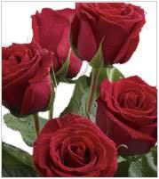 A Guy's Guide to Buying <b>Flowers</b> for <b>Women</b> | Teleflora