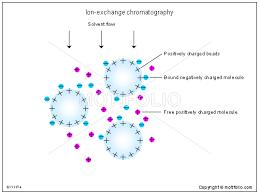 Ion Exchange Chromatography Illustrations