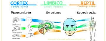 Resultat d'imatges de lo racional y emocional del cerebro