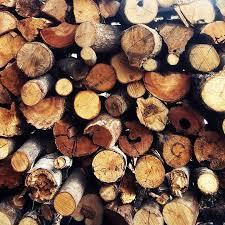 Resultado de imagen para troncos arboles