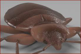 25 Best Of How To Get Rid Of Cockroaches In Kitchen Cabinets