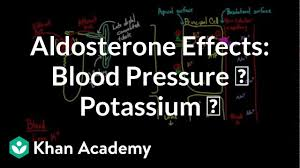 Potassium Blood Levels Chart Aldosterone Raises Blood Pressure And Lowers Potassium