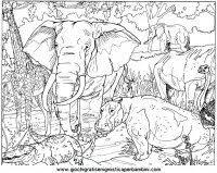 Disegni Da Colorare E Stampare Per Bambini Animali Della Savana