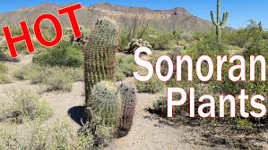 desert plants with names. Modren Names Sonoran Desert Plants Cactus Trees Shrubs Of Arizona With Names E