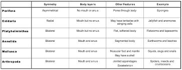 61 Meticulous Phylum Arthropoda Characteristics Chart