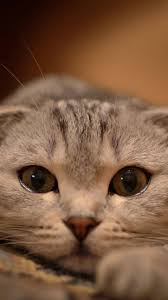 cute cat wallpaper iphone. Plain Iphone Download For Cute Cat Wallpaper Iphone H
