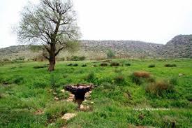 Image result for پیروزبایی سه ری سالی نوی