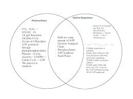 Chloroplast Mitochondria Venn Diagram Chloroplast Diagram Worksheet Michaelhannan Co