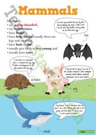 Animal Classification Posters All Teaching Resource