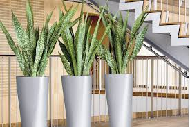 Interior landscaping office Simple Interior Interior Plant Watering Pruning Maintenance Services