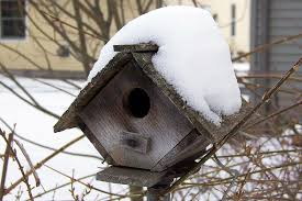 wooden bird houses for unique safe and easy shelter for winter birds