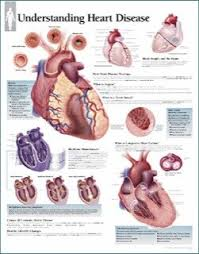 Anatomy Of The Heart Chart Understanding Heart Disease Anatomy Poster