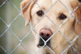animal shelters sad. Exellent Sad Pin Sad Dog In Pound To Animal Shelters