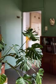 Green Plants, Indoor Garden, Indoor Plants, Interior Plants, Sweet, House  Plants, Wall Colors, Gardens, Pink Out