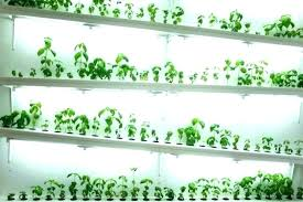 indoor hydroponic garden wall medium size of green walls vertical planting systems modular gardening ecopro led indoor hydroponic garden