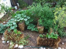 straw bale garden update success