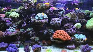 AMAZING Marine Aquarium Screensaver --