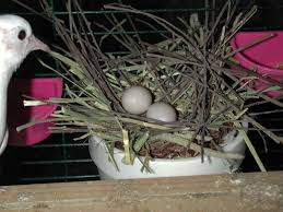egg in newly built nest