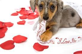 cute animal valentines day wallpaper. Contemporary Valentines For Cute Animal Valentines Day Wallpaper U