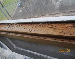 How To Get Rid Of Termites With Wings In House
