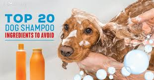 natural shampoo for dogs