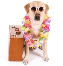 travel budget with pets