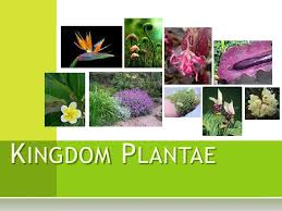 PLANT KINGDOM ,Classification notes with HOT Questions