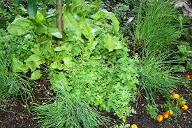 top five herbs for your garden