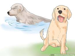 image led learn breeds of dogs step 6