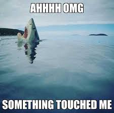 collection of the funniest shark memes the interwebs has ever produced these are the shark memes everyone on the internet respected before shark memes