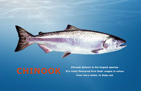 Identifying Types Of Salmon Chefs Resources