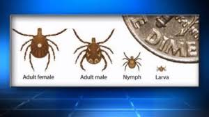 Lone Star Tick can make you allergic to meat, BBQ