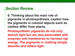 critical thinking questions on photosynthesis   Buy A Essay For Cheap   Drukuj    personal statement uc prompt