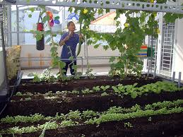 Kết quả hình ảnh cho trồng rau sạch tại nhà