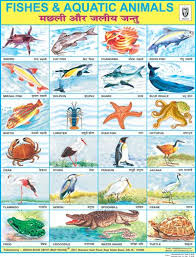 Fish Aquatic Animals Fish Chart School Posters Animals