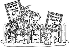 Small Picture Carrot and Tomato Garden Coloring Pages Color Luna