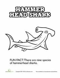 Small Picture Great White Shark Coloring Page Shark Worksheets and School