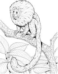 Golden Lion Tamarin Monkey Coloring Pages L